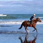 promenades équestres sur la plage le touquet